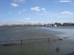 árvíz II.2006 006