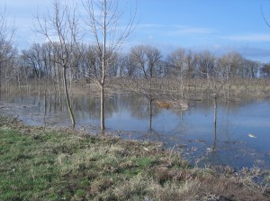 árvíz II.2006 101