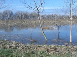 árvíz II.2006 180